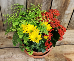 Spring Flower/Plant Container, Florist's Choice
