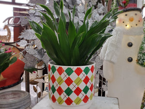 Green Plant, Florist's Choice