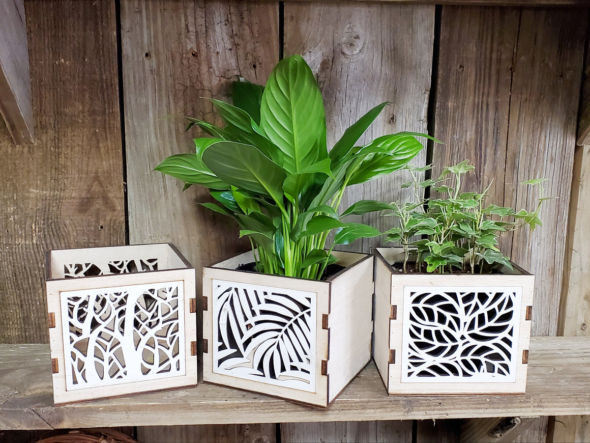 "Wood Cut-Out Container (with or without 4"" Plant)"