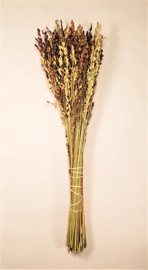 Dried Broom Corn