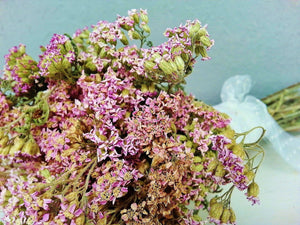 Dried Pink Yarrow Flowers