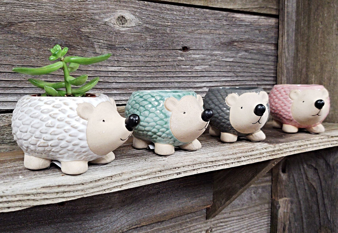 Hedgehog Ceramic Pot (with or without Plant)