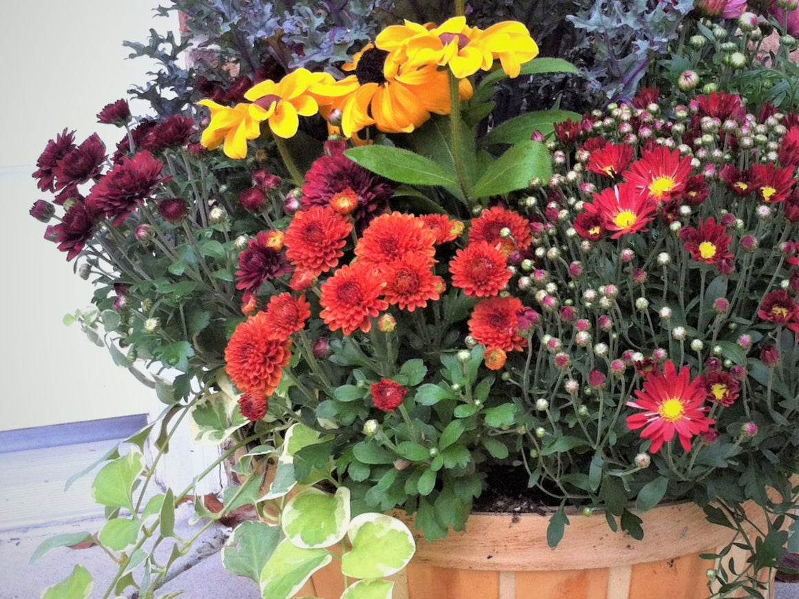 Fall Flower/Plant Basket, Florist's Choice