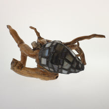 Load image into Gallery viewer, Bohn - Hermit Crab Onyx-Pearl