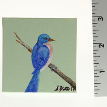 Load image into Gallery viewer, Yates - Tiny Painted Canvas - Eastern Bluebird Bluebird On Mint