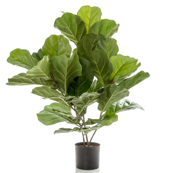 Fiddle Leaf Medium
