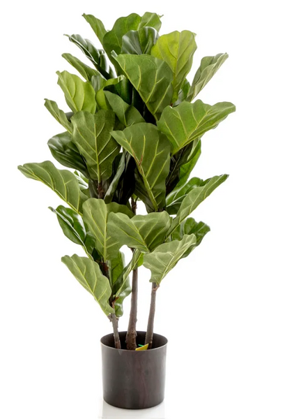 Fiddle Leaf Large