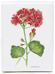 Geranium - box of 8