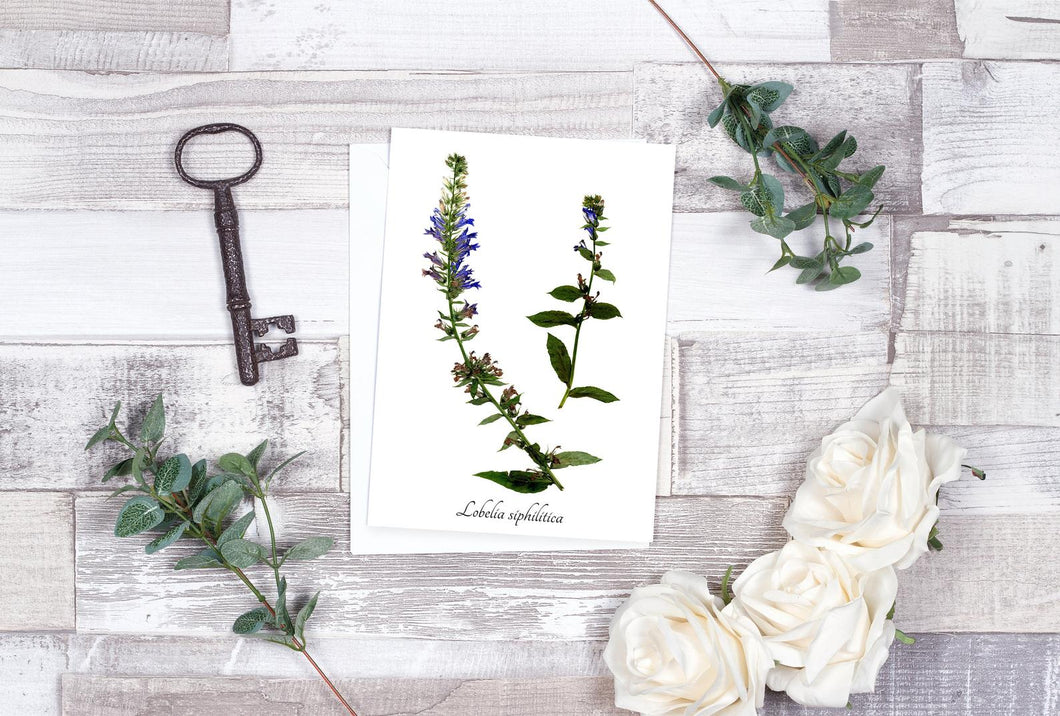 Blue Lobelia Botantical Card