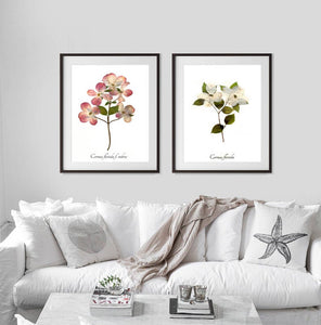 Dogwood Botanical Prints