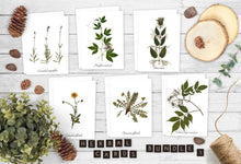 Load image into Gallery viewer, Medicinal Herbs Greeting Card Pack