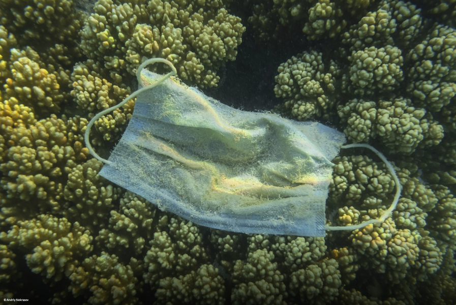 """'More Masks Than Jellyfish': The devastating impact of PPE on marine life"""