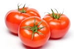 TOMATOES - TOMATES / PACK OF 3