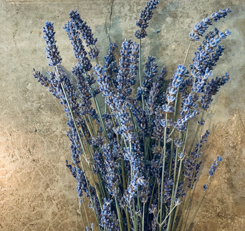 Fresh Lavander Bunch - Lavanda