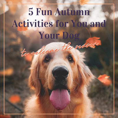 5 Fun Autumn Activities for You and Your Dog to Welcome the Season