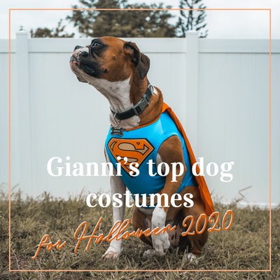 Gianni's top dog costumes for Halloween 2020