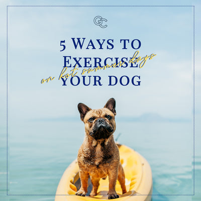5 Easy Ways to Exercise Your Dog on Hot Summer Days