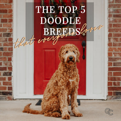 The Top 5 Doodle Breeds Everyone Loves