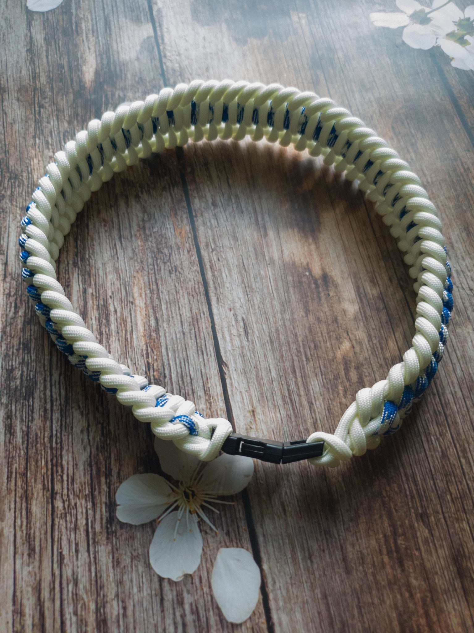 Trilobite Dog Collar Blue & White