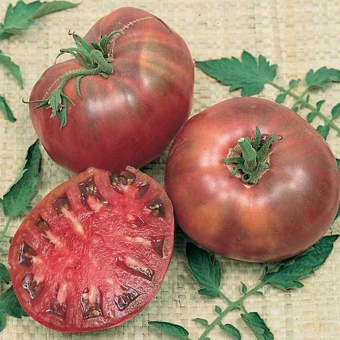 Tomato黑鹅肝有机番茄#V095 - Songsco.com - Ocean Nursery