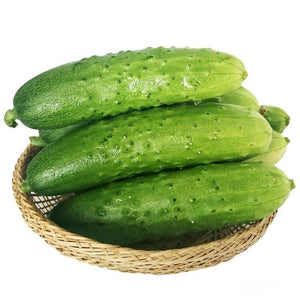 Mini Cucumber水果黄瓜#V097 - Songsco.com - Ocean Nursery