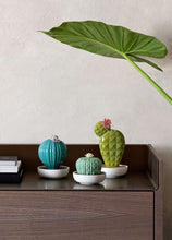 Load image into Gallery viewer, Lladró: Cactus Collection. Astrophytum Cactus Fragance Diffuser