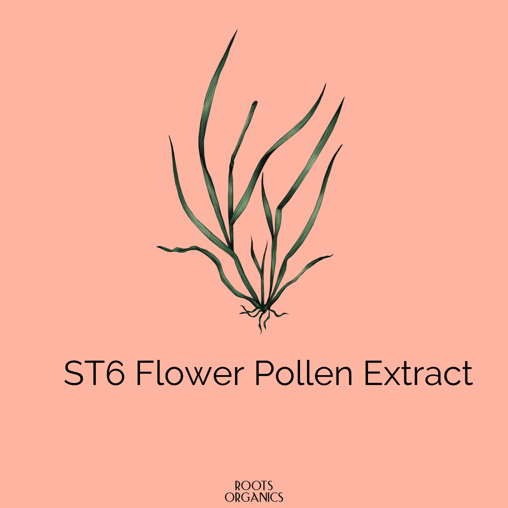 ST6 Flower Pollen Extract The secret Behind Our Healthy Skin Tea