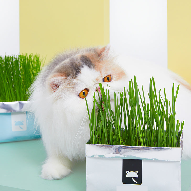 APETLOVE™-Cat Grass Plus
