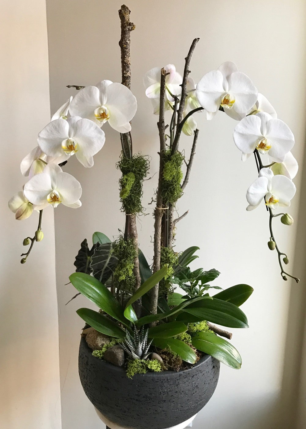 shop.balconi.ca Eco Planter Orchid Serendipity