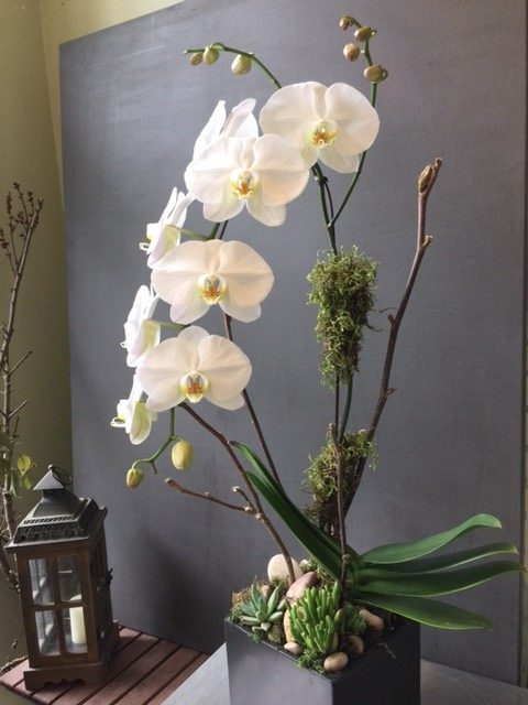shop.balconi.ca Eco Planter Orchid Serenity