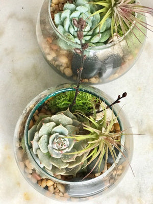 shop.balconi.ca Mini Succulent Terrarium