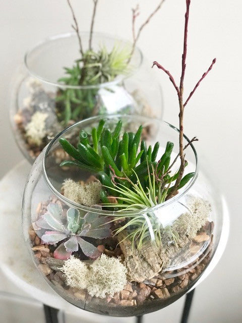 Small Glass Globe Terrarium with Air Plant