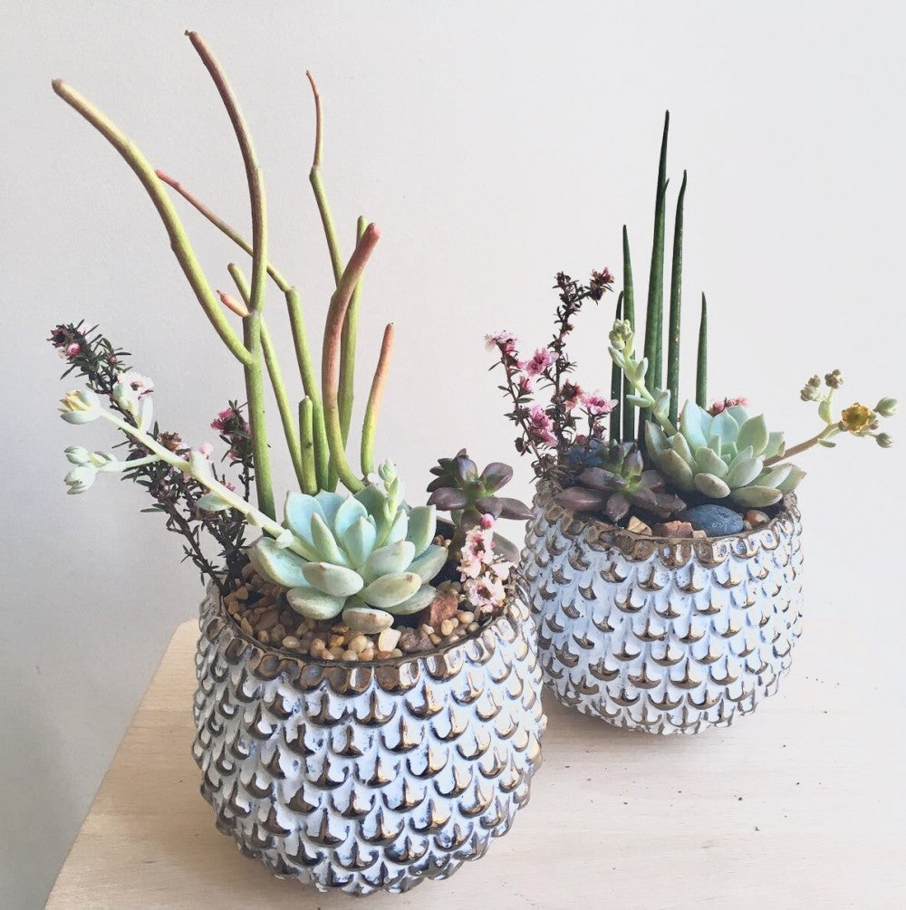 shop.balconi.ca Eco Planter Succulent Yaletown