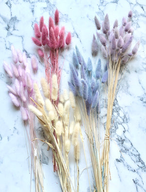 shop.balconi.ca Bunny tail Grass
