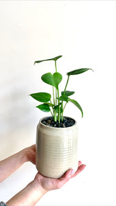 shop.balconi.ca Eco Planter Spades