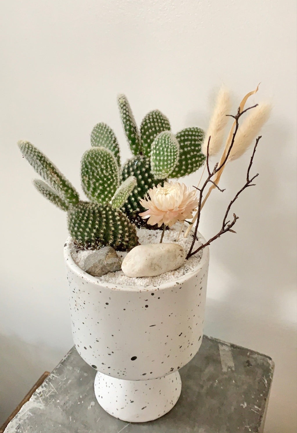 shop.balconi.ca Eco Planter Cactus Whimsy Corners