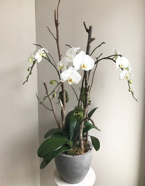 shop.balconi.ca Eco Planter Orchid Tranquility