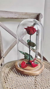shop.balconi.ca Preserved Rose Belle