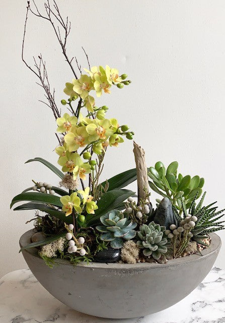 shop.balconi.ca Eco Planter Orchid Succulent Wild and Free