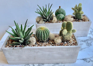 shop.balconi.ca Eco Planters Arizona