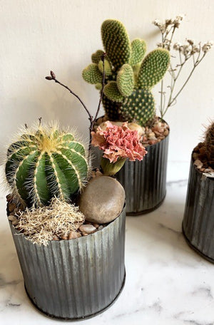 shop.balconi.ca Eco Planter Cactus Scottsdale