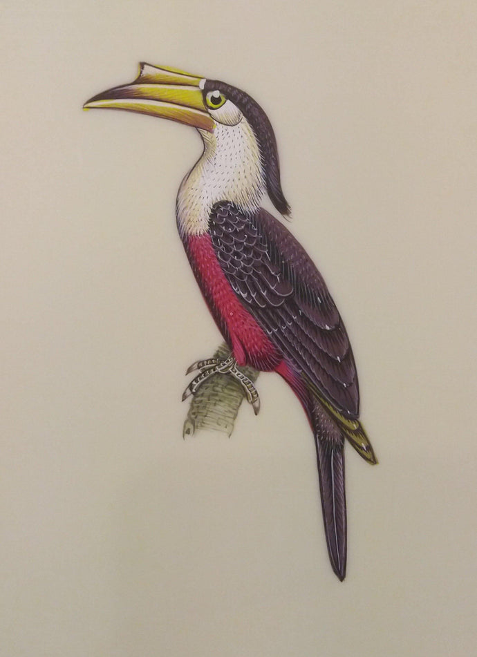 Hornbill Bird Painting Artwork