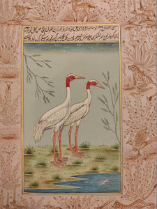 Beautiful Hand Painted Ostrich Bird On Paper Art - ArtUdaipur