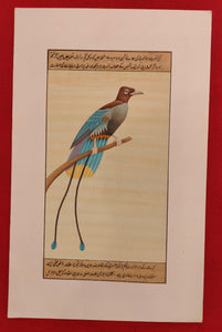 Handmade Bird Collection on Paper