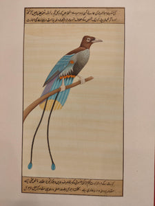 Hand Painted Bird Birds Miniature Painting India Artwork Paper Nature - ArtUdaipur