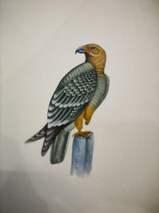 Hand Painted Eagle Bird Birds Miniature Painting India Artwork Paper Nature - ArtUdaipur