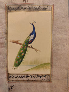 Peacock Bird on Old Paper Miniature Painting India - ArtUdaipur