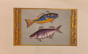 Fish Animal Miniature Painting India Art Nature Paper Aquatic Life - ArtUdaipur