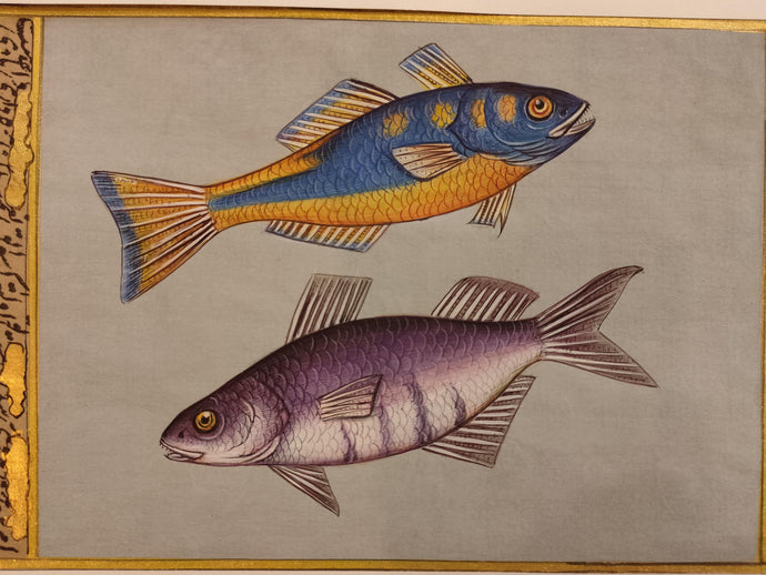 Fish painting Art Collection
