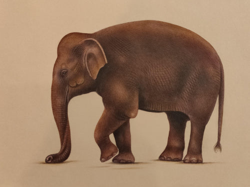 Elephant Art Collection Paper Home Decor